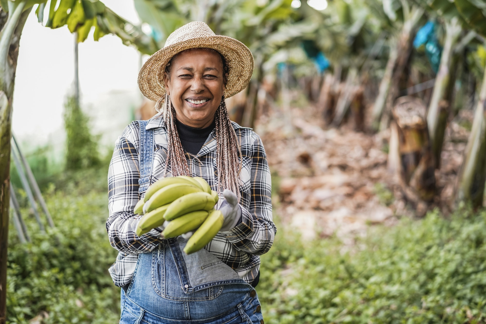 Senior african farmer woman working at greenhouse while holding a banana bunch - Focus on face